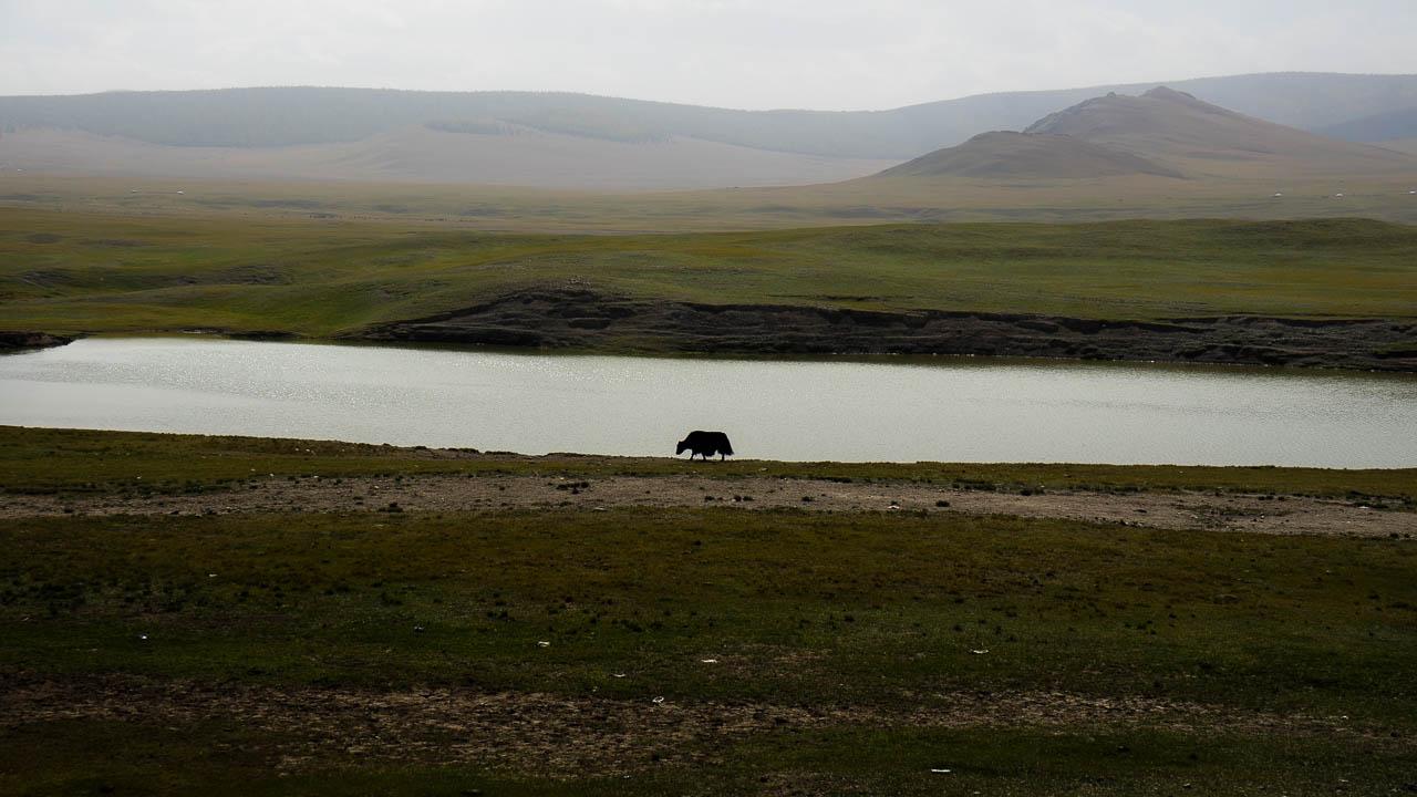 Mongolie à vélo 2261