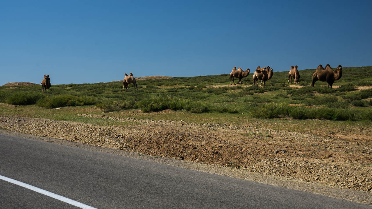 Mongolie à vélo 2899
