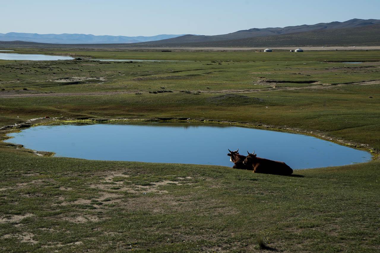 Mongolie à vélo 3257