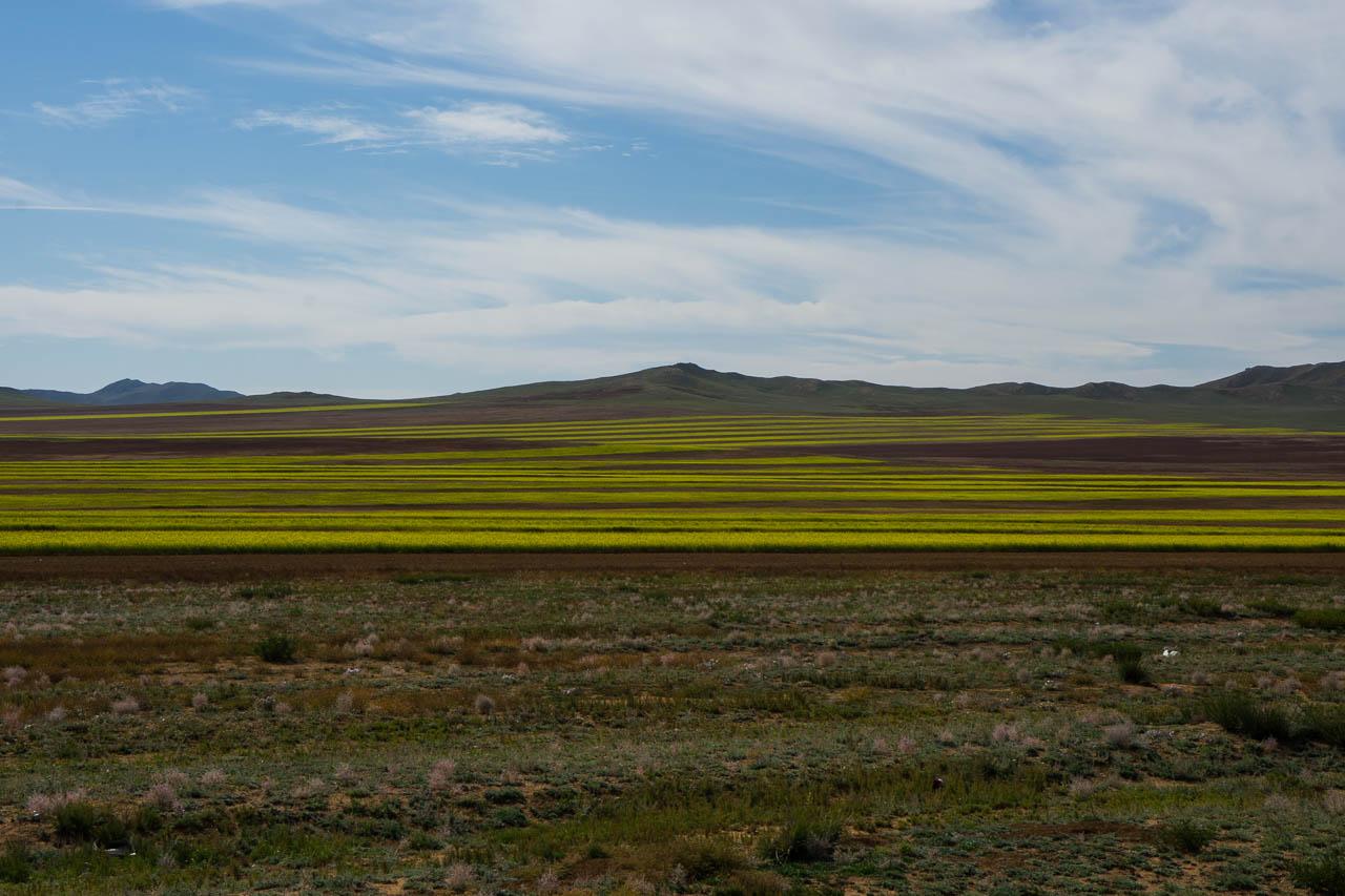 Mongolie à vélo 3261