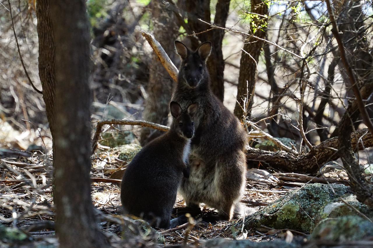 Tasmanie-106