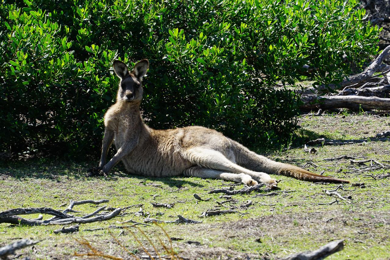Tasmanie-107