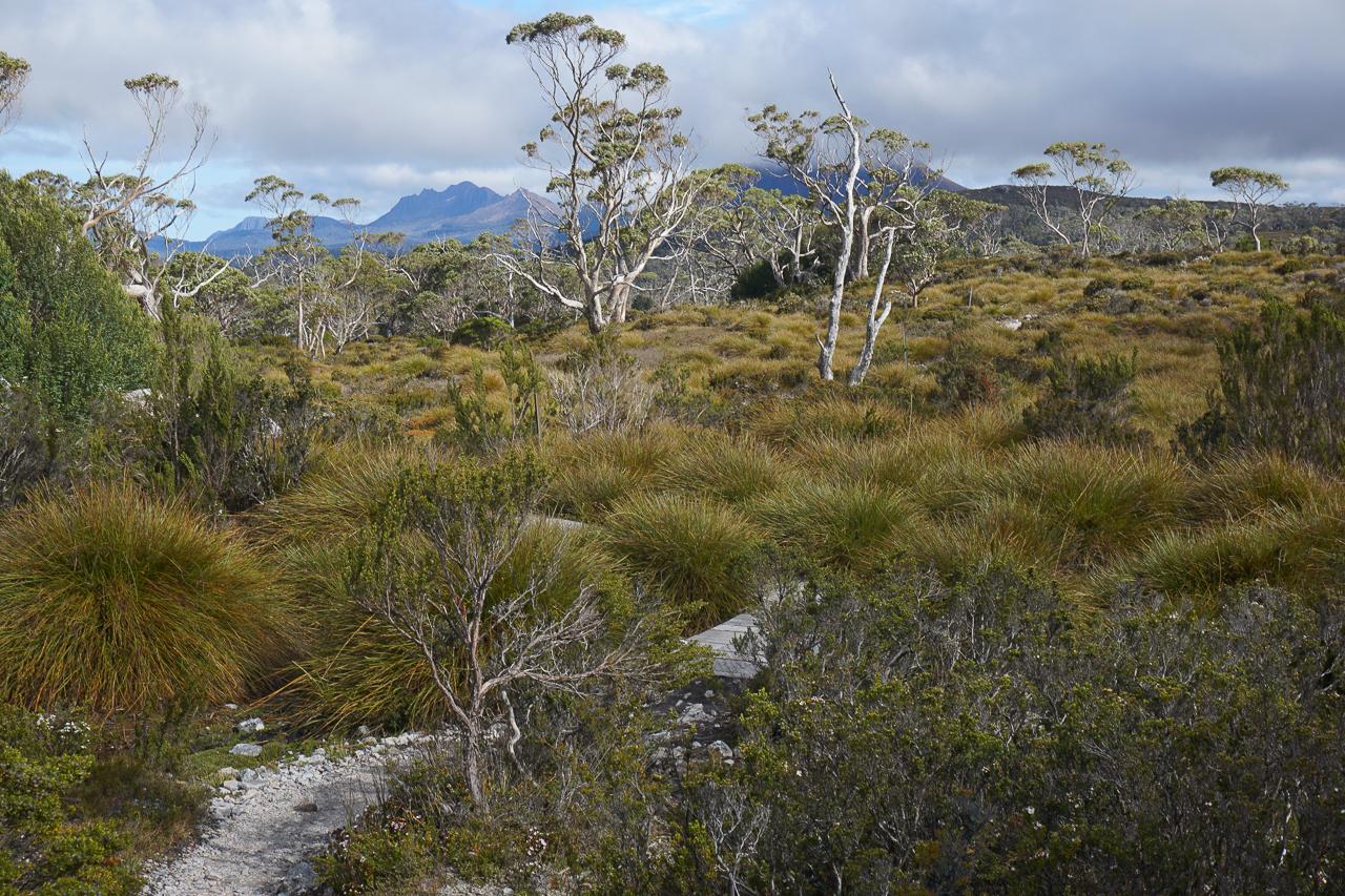 Tasmanie-27