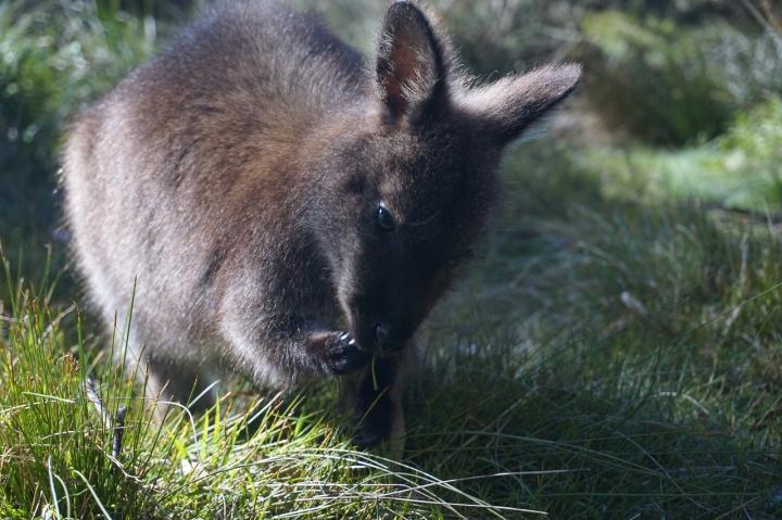 Tasmanie-32