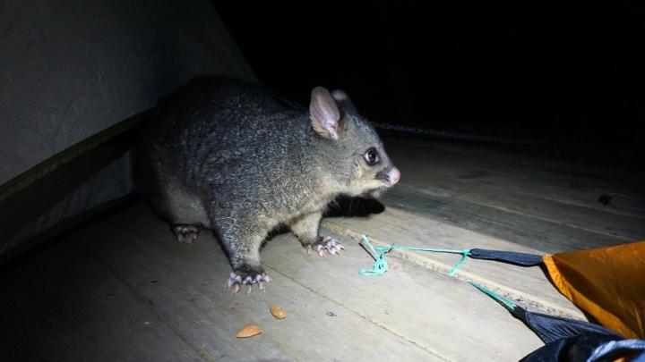 Tasmanie-45