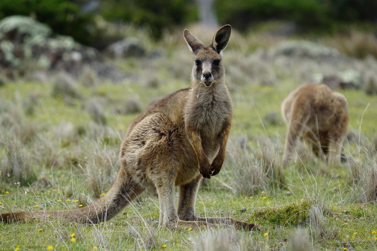 Tasmanie-84