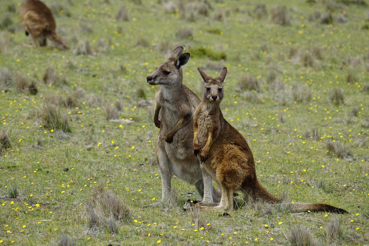 Tasmanie-86