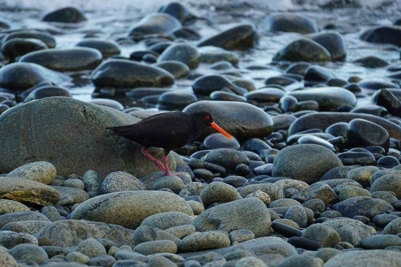 Stewart Island-12
