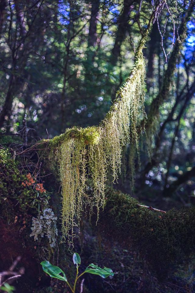 trekking wanaka region-11