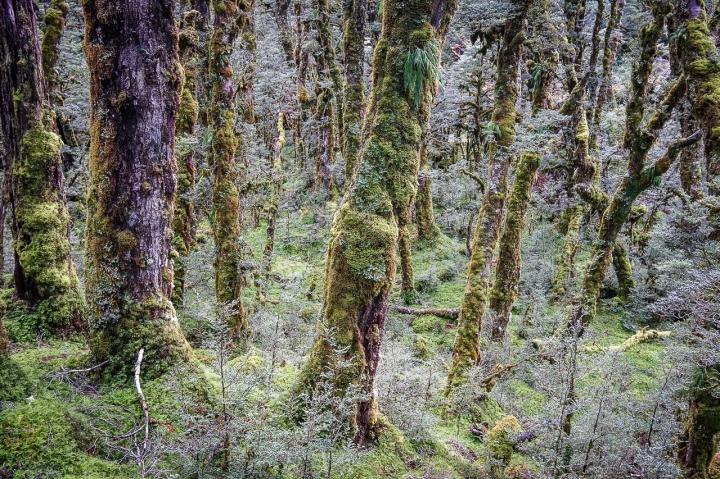 Voyage Nouvelle Zélande-10