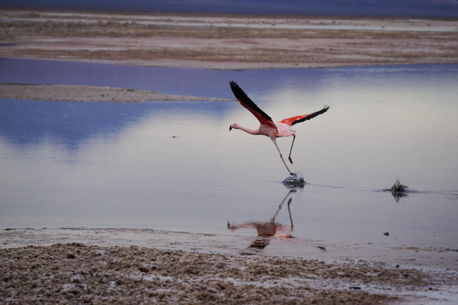 Photos Atacama-12