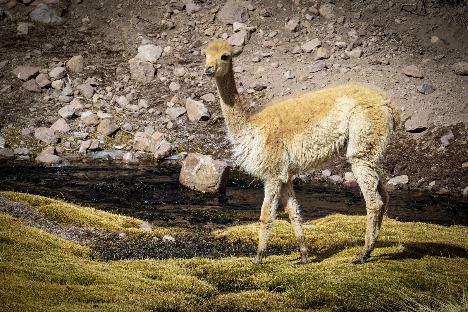 Photos Atacama-26