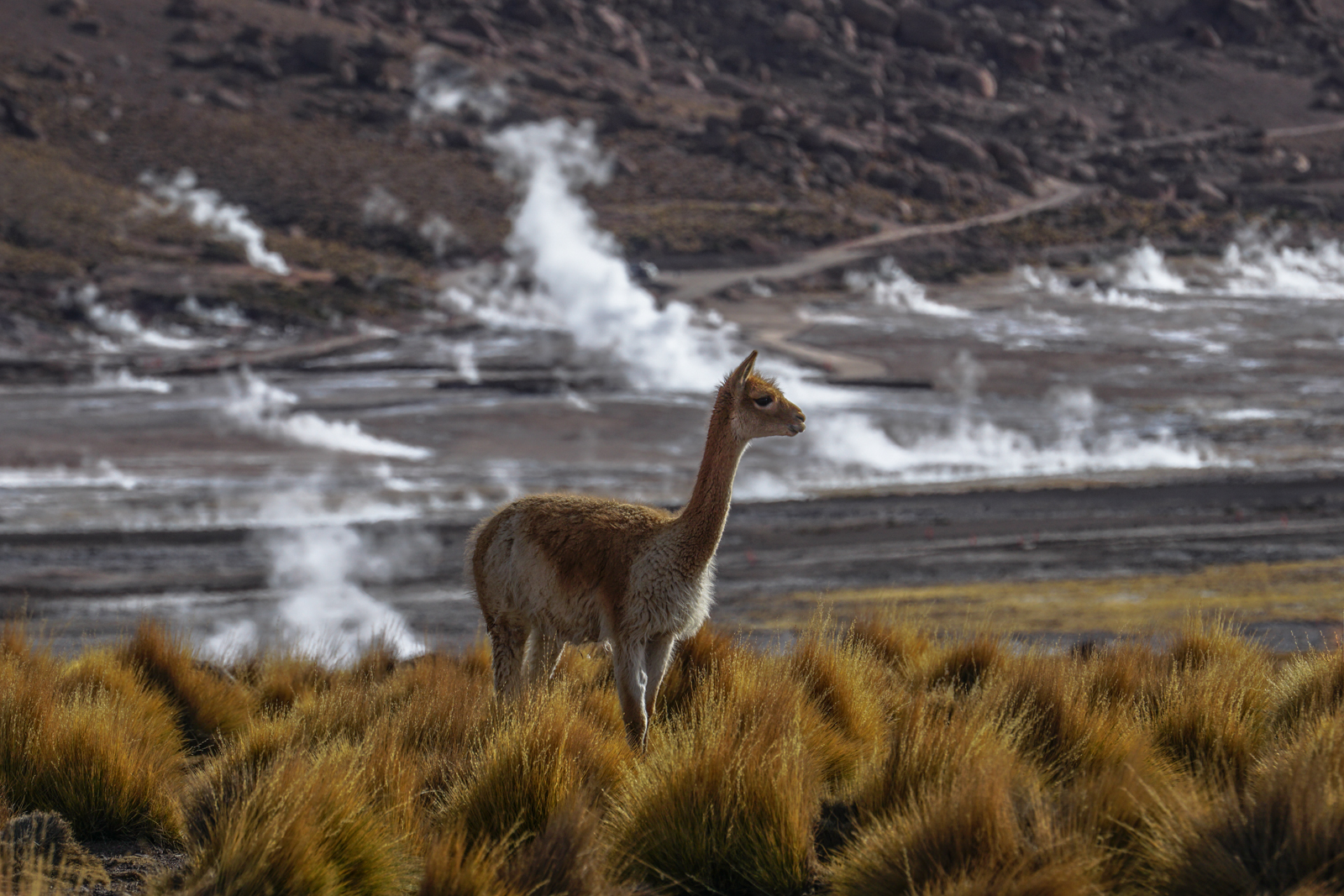 Photos Atacama-35