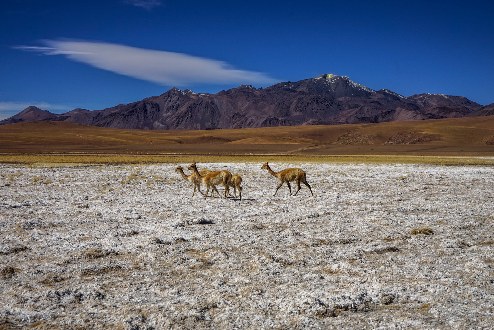 Photos Atacama-37