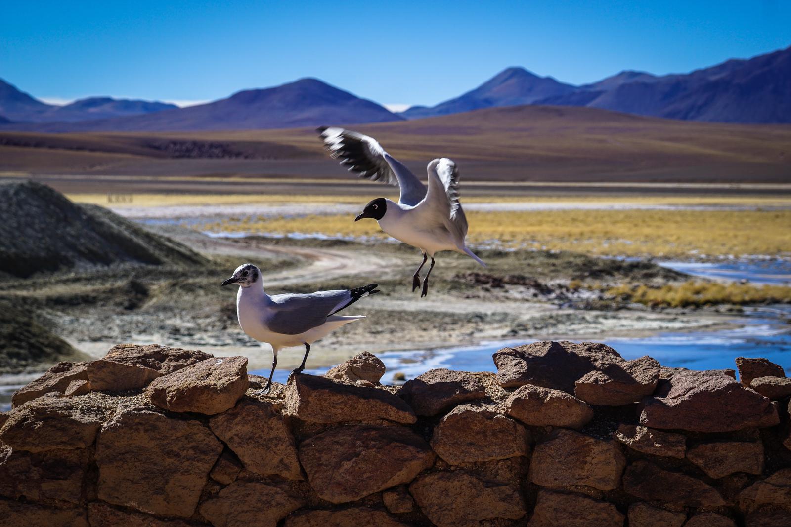 Photos Atacama-57